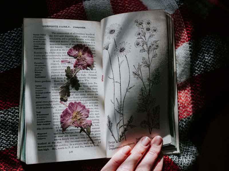 Stampa botanica